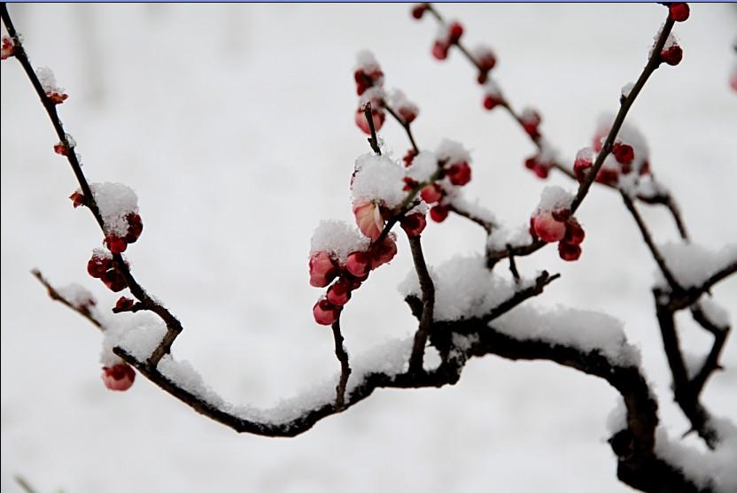 当我走在放学的路上时,我又听见了风声,我想起了亭子旁的梅花